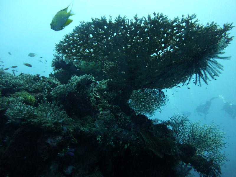 Plongee au Liberty Wreck10