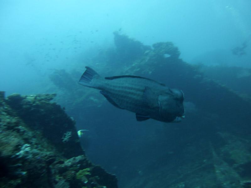 Plongee au Liberty Wreck11