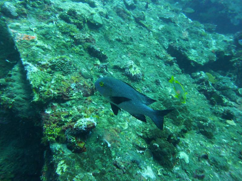 Plongee au Liberty Wreck12