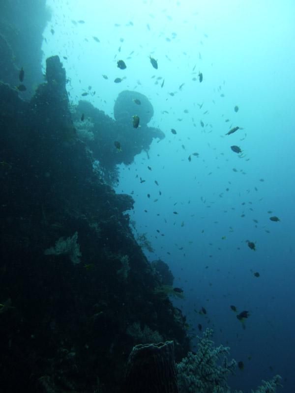 Plongee au Liberty Wreck15