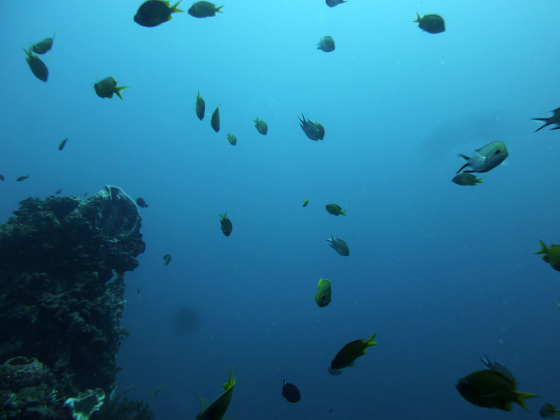 Plongee au Liberty Wreck16