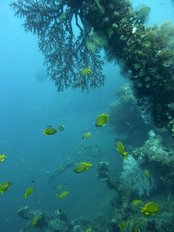 Plongee au Liberty Wreck25