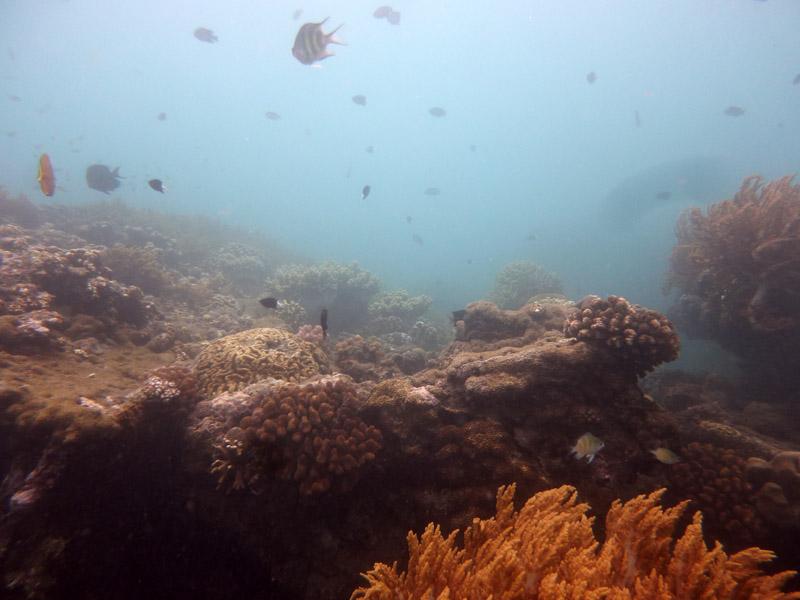 Snorkeling a Jemeluk02
