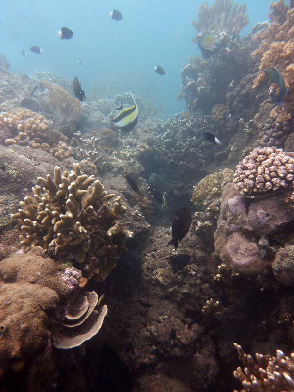 Snorkeling a Jemeluk03