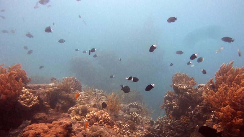 Snorkeling a Jemeluk05