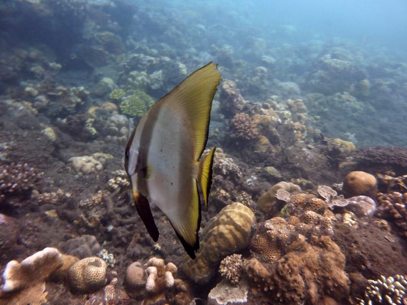 Snorkeling a Jemeluk11