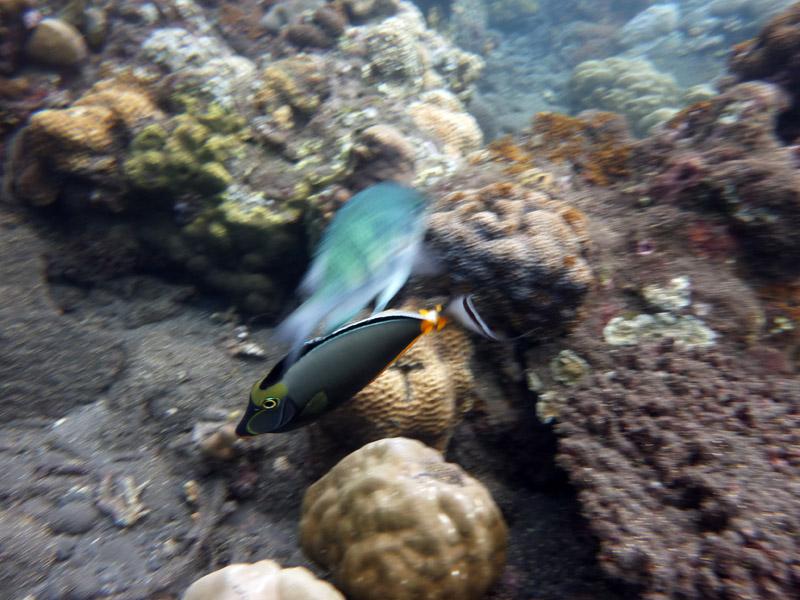 Snorkeling a Jemeluk12