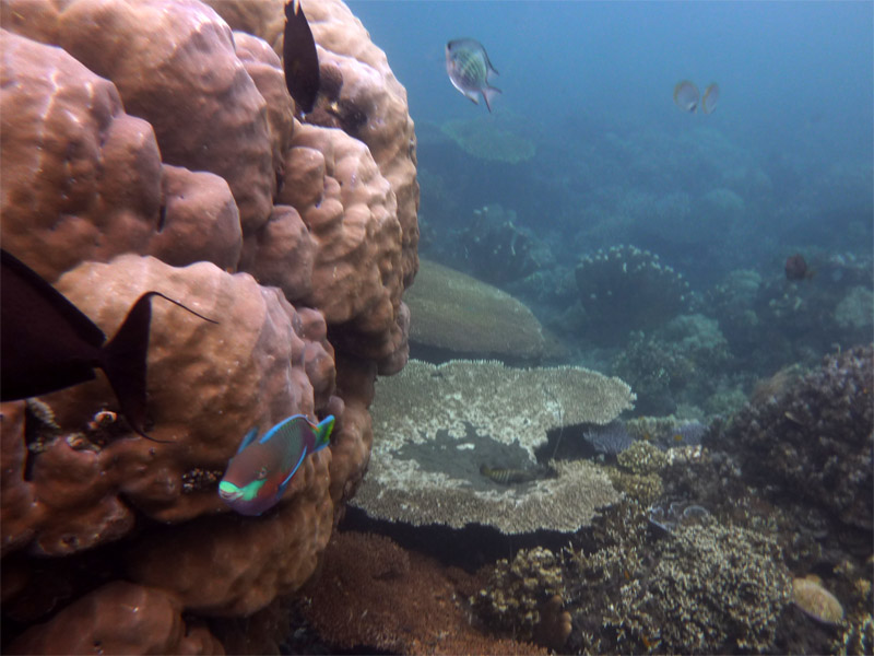 Snorkeling a Jemeluk13