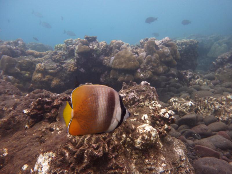 Snorkeling a Jemeluk19