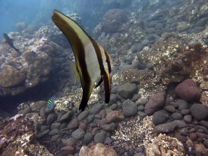 Snorkeling a Jemeluk20