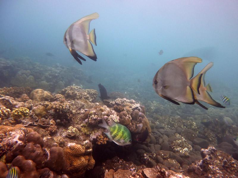 Snorkeling a Jemeluk22