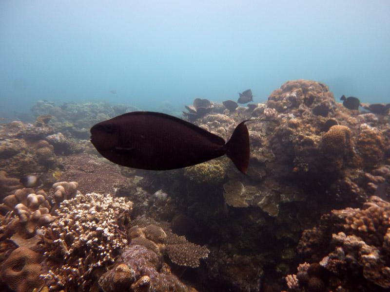 Snorkeling a Jemeluk23