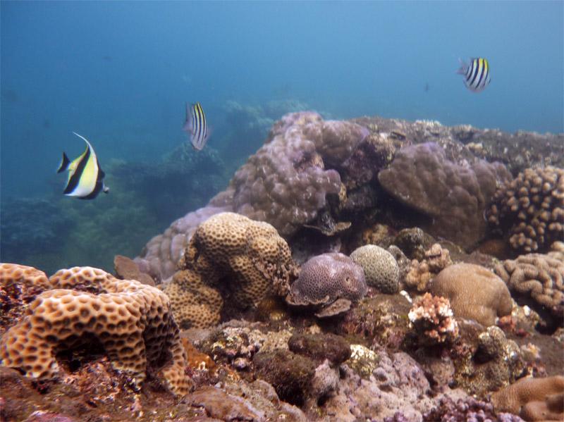 Snorkeling a Jemeluk25