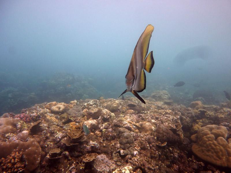 Snorkeling a Jemeluk26