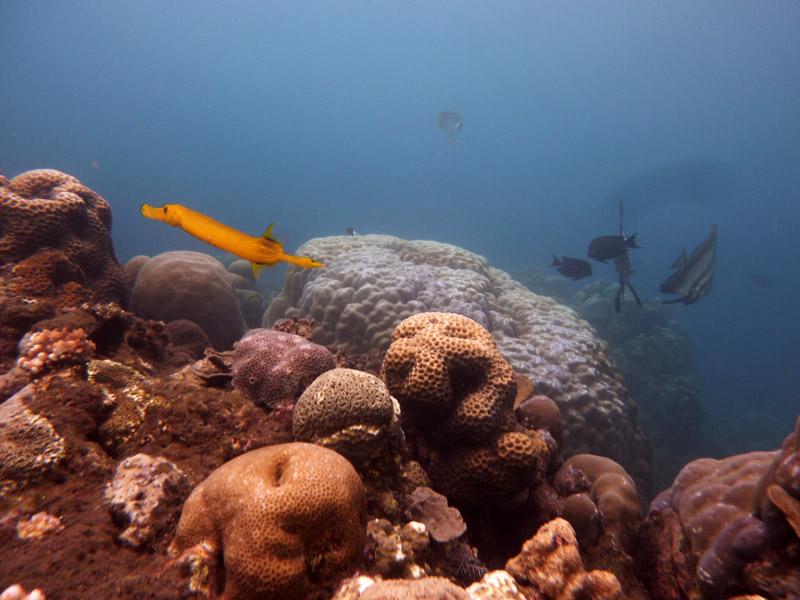 Snorkeling a Jemeluk27