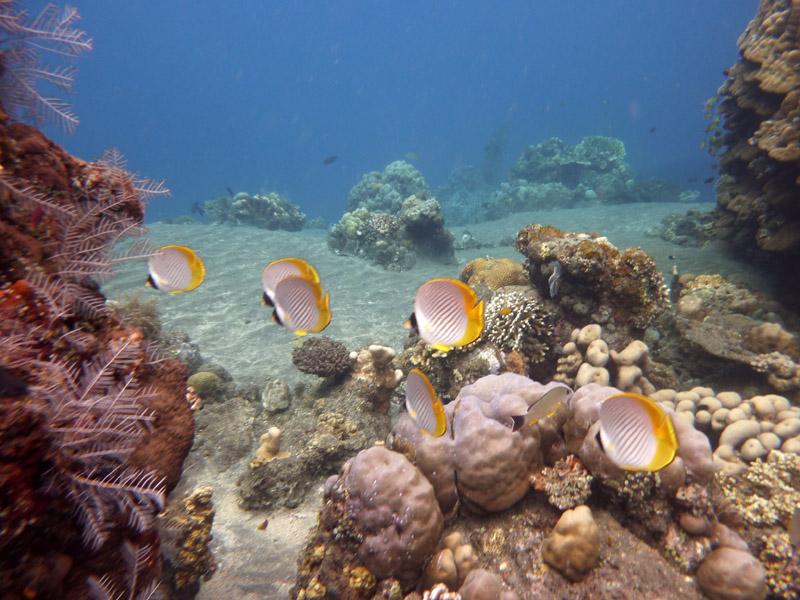 Snorkeling a Jemeluk29