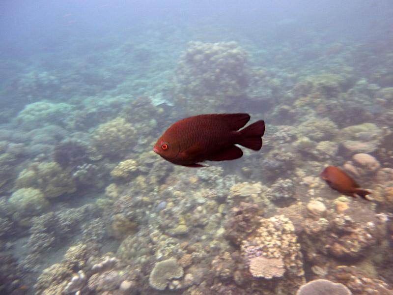 Snorkeling a Jemeluk31