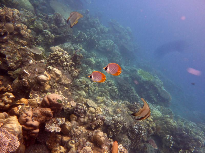 Snorkeling a Jemeluk32