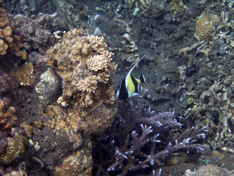 Snorkeling a Jemeluk33