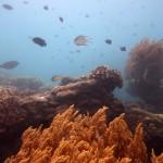 Snorkeling a Jemeluk04