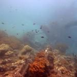 Snorkeling a Jemeluk06