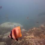 Snorkeling a Jemeluk08