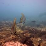 Snorkeling a Jemeluk09