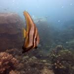Snorkeling a Jemeluk10