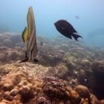Snorkeling a Jemeluk14