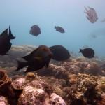 Snorkeling a Jemeluk15