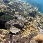 Snorkeling a Jemeluk16