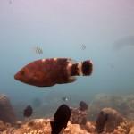 Snorkeling a Jemeluk17