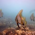 Snorkeling a Jemeluk18