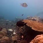 Snorkeling a Jemeluk24
