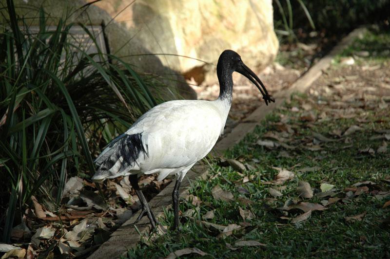 Sydney - Taronga Zoo02