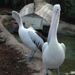 Sydney - Taronga Zoo04