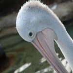 Sydney - Taronga Zoo05