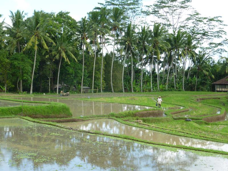 Ubud - Bali08