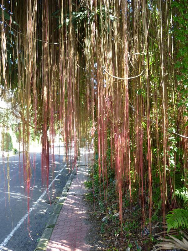 Ubud - Bali09