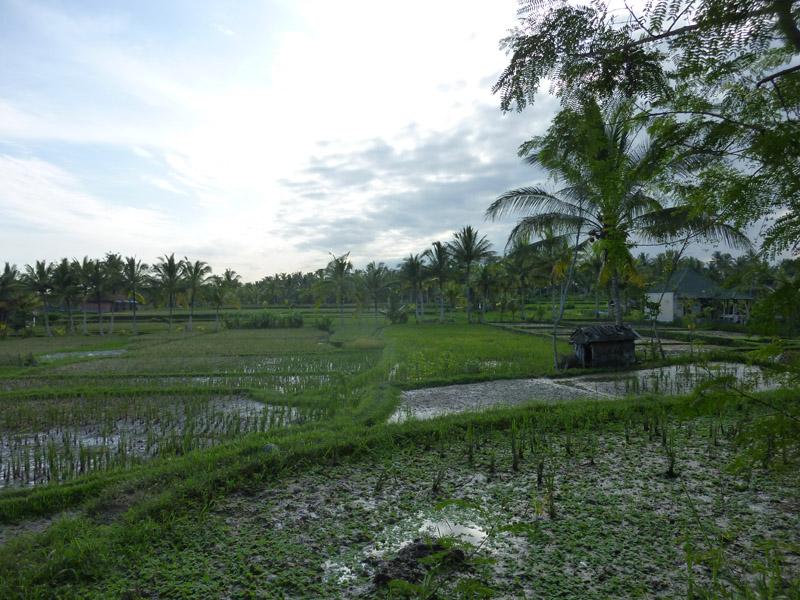 Ubud - Bali14