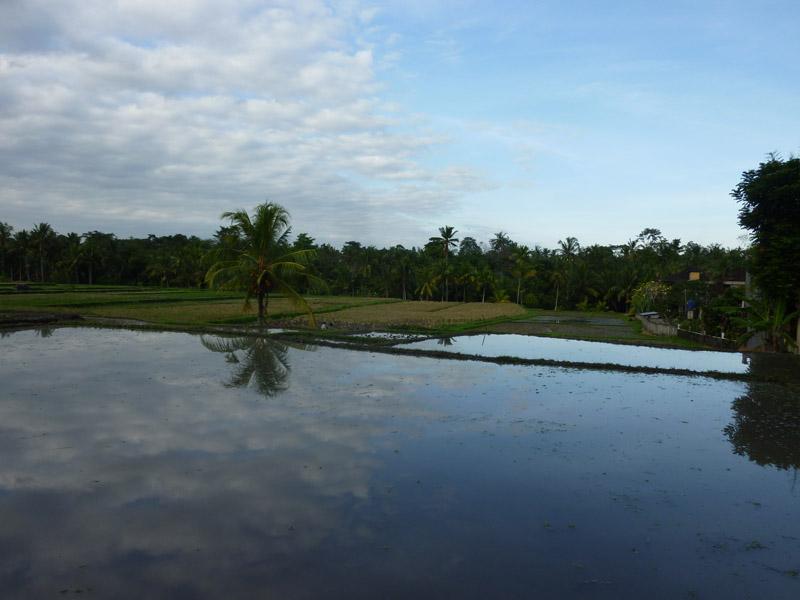 Ubud - Bali15