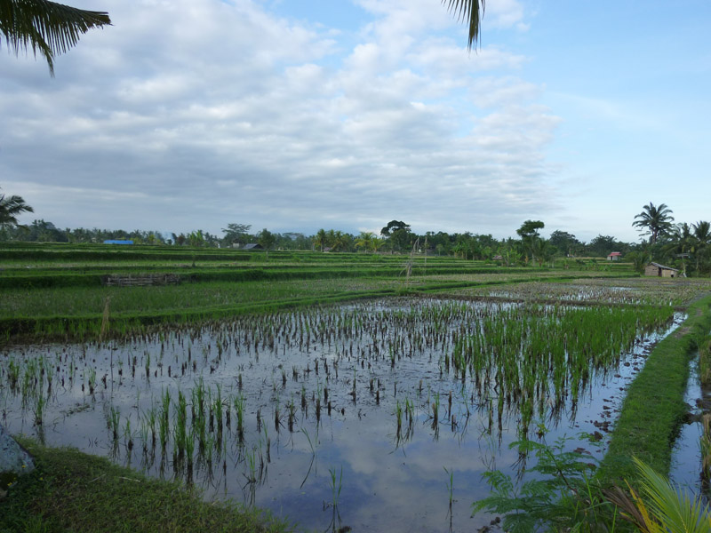 Ubud - Bali18