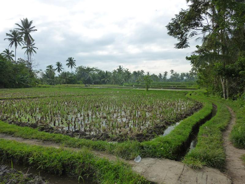 Ubud - Bali22
