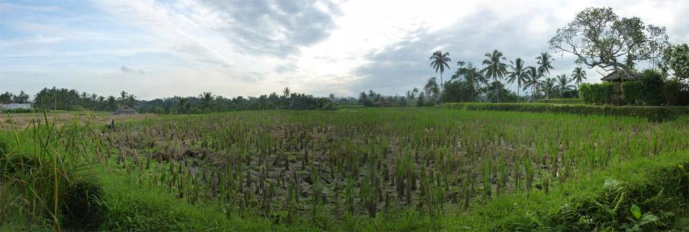 Ubud - Bali23