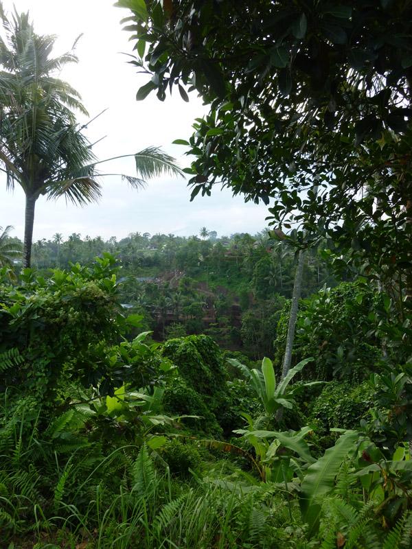 Ubud - Bali25