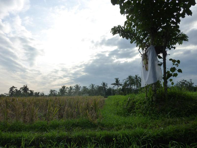 Ubud - Bali26