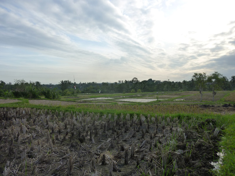 Ubud - Bali27