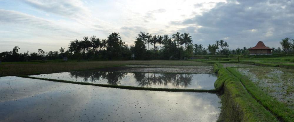 Ubud - Bali29