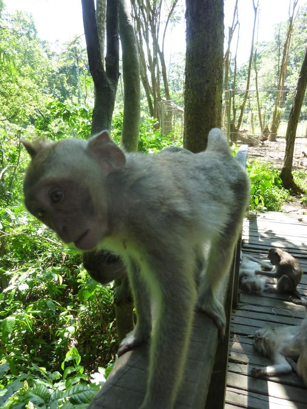 Ubud - Bali37