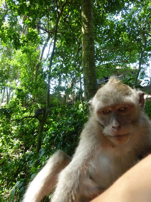 Ubud - Bali39
